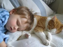 snuggly child and kitten