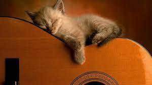Kitten sleeping on guitar