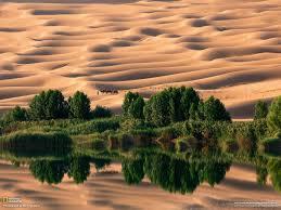 camel oasis