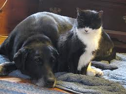 cat and dog cuddled up