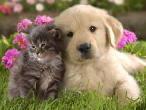 happy puppy and kitten