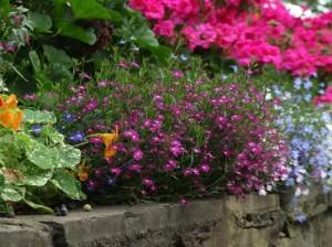 blog princes street gardens