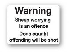 highland sheep worrying