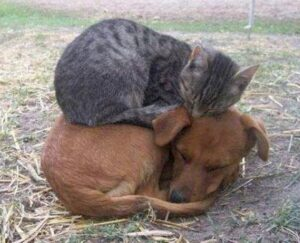 cat sleeps on top of dog