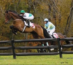 horse steeplechase