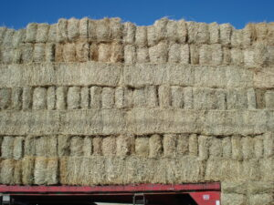 jan wall of hay