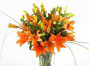touch week day lilies