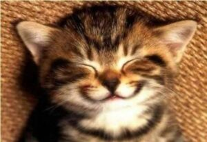 blog happy kitten