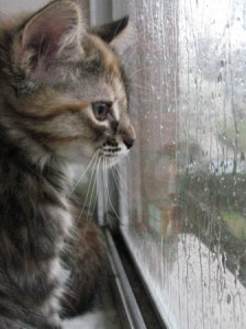 blog kitten watching rain