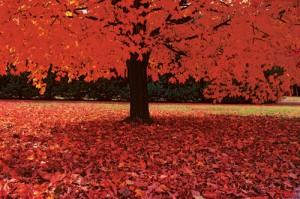 blog autumn leaves