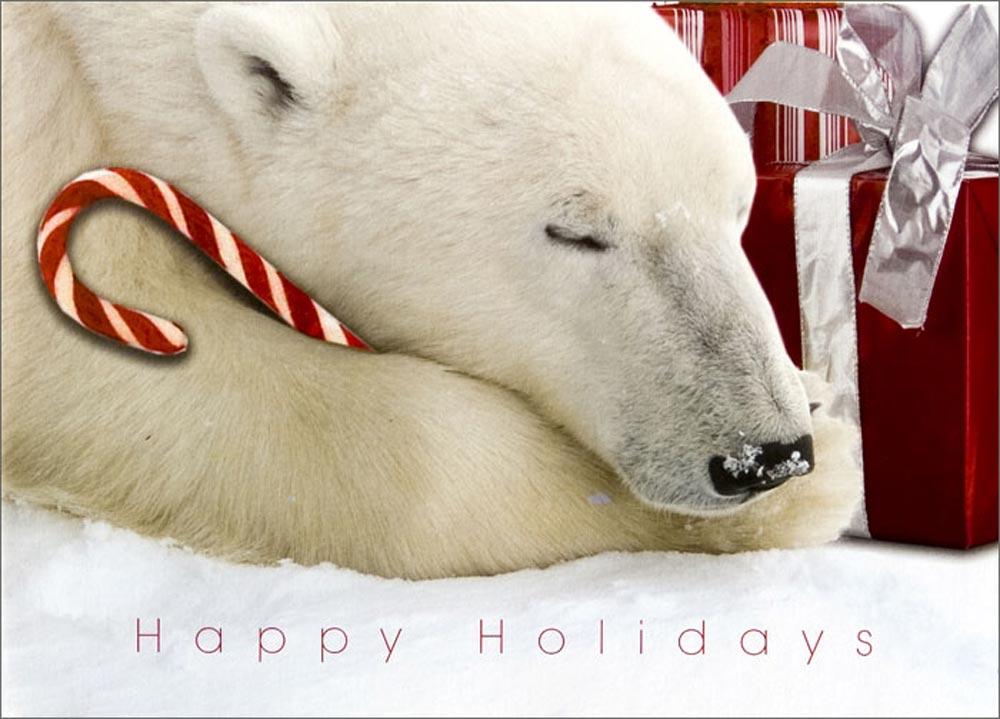 Polar Bear 42 D 25 LYLA - Canadian Escort...
