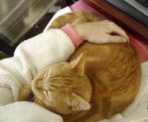 lap-cat