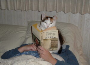 cat reading bed