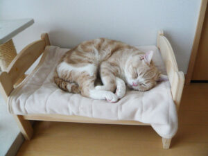 cat small bed