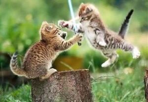Kittens-KittensFightingUsingLightSa (1)