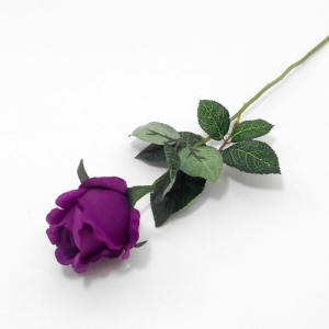 single_purple_rose