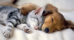 blog pup and kitten