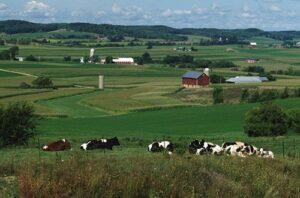 blog beautiful dairy farm