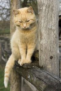 blog furry kitty