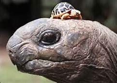 tortoiseXbaby