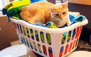 blogxlaundry